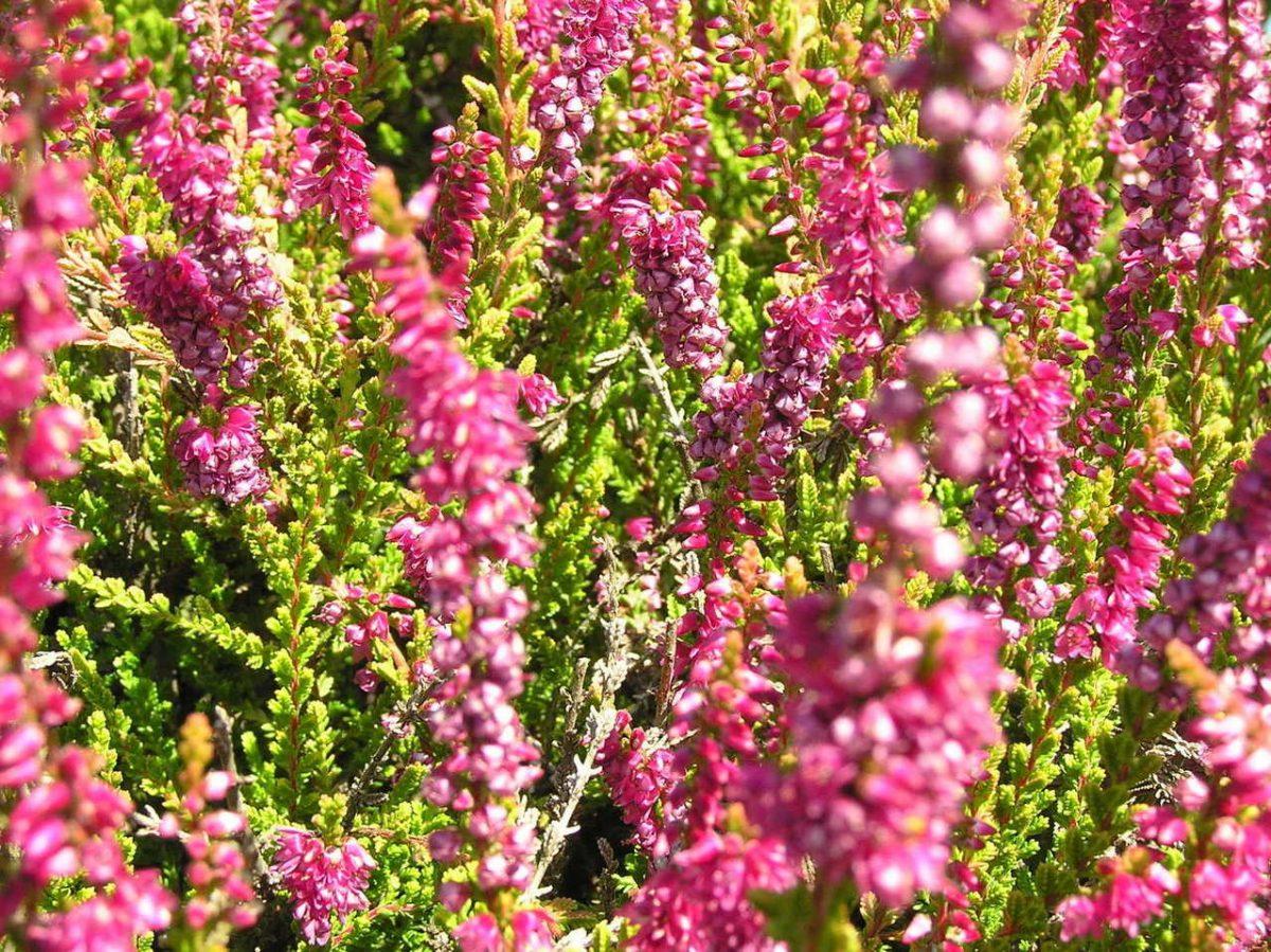 Jak dbać o kwiaty w skalniaku?