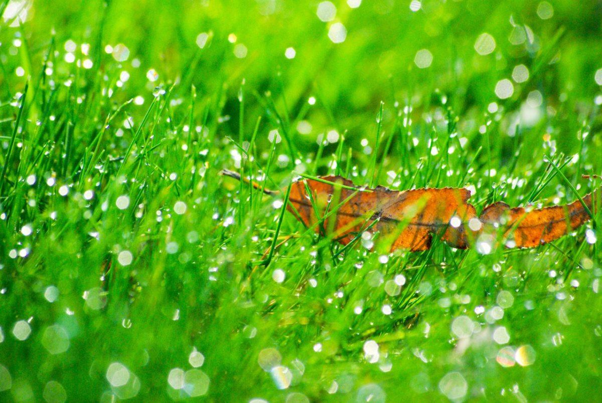 Rodzaje kosiarek do trawy
